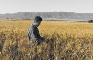 Leonardo Petruccelli, il contadino appassionato ai grani antichi